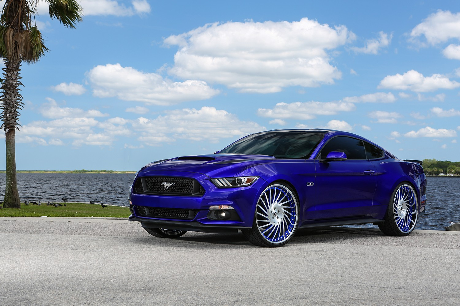 royal-pony-express-ford-mustang-by-forgiato-has-oversized-wheels_1
