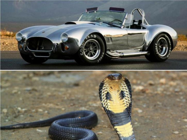 #10. Shelby Cobra