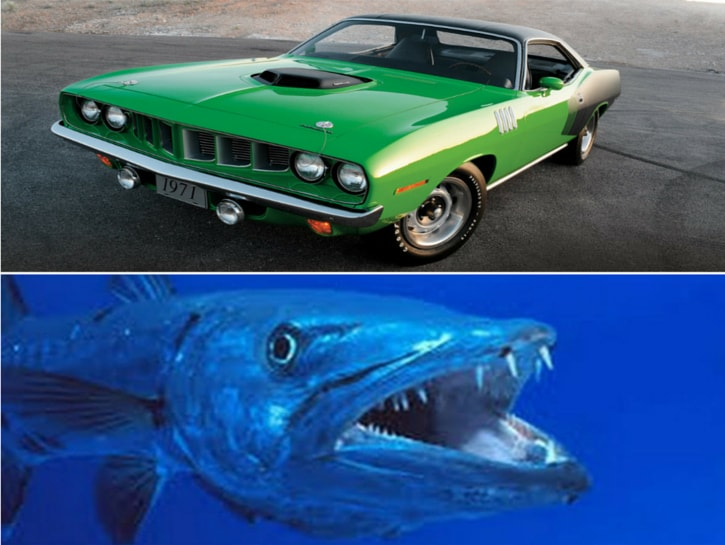#11. Plymouth Barracuda - cars named after animals