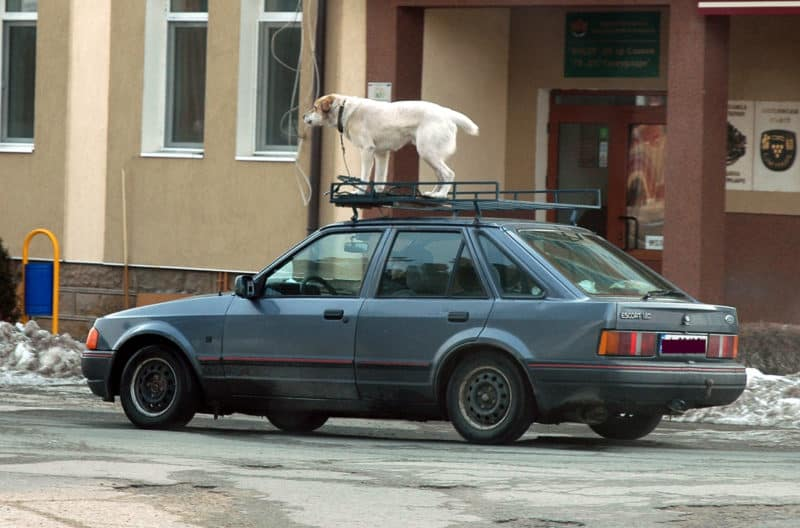 Dog on a roof rack