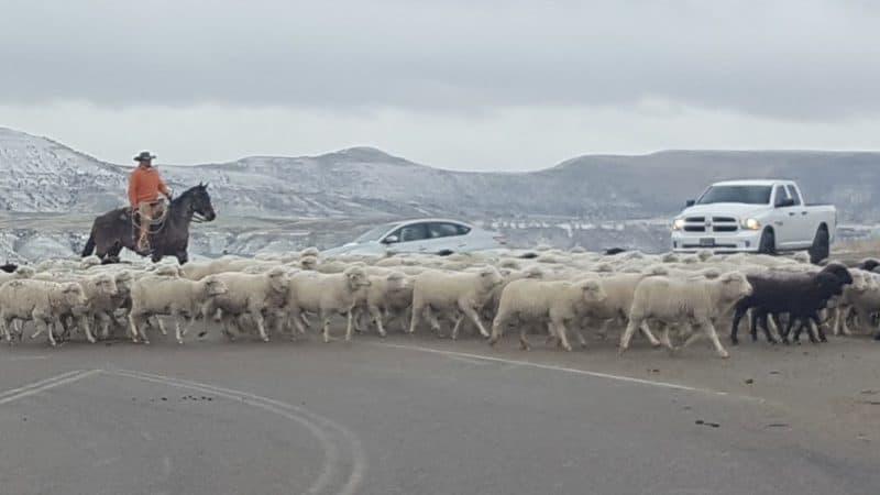 Herding across roads
