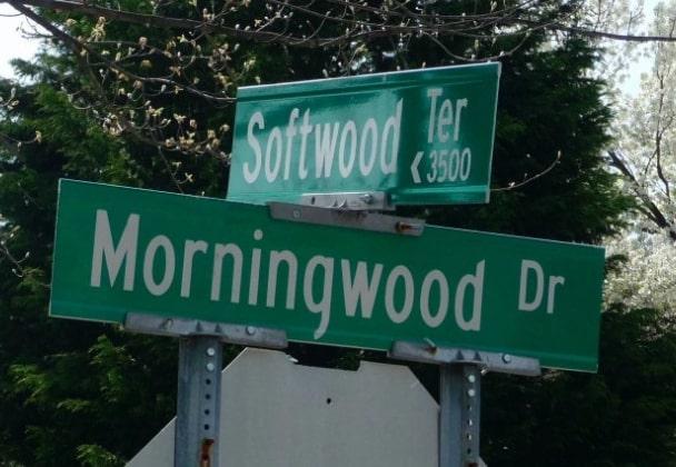 Softwood or Morningwood?